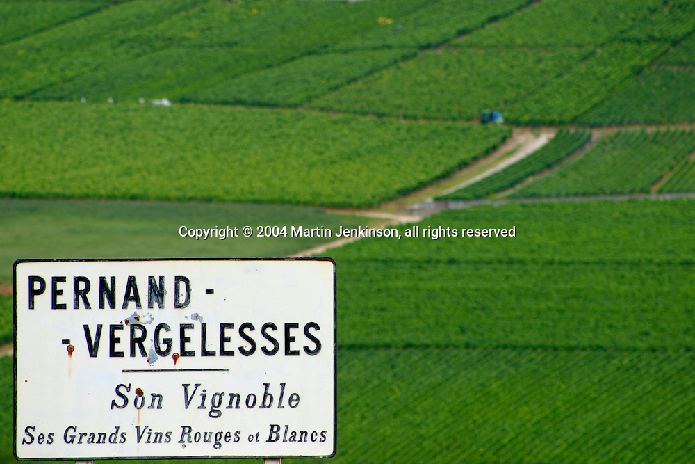 Vineyards, Pernand Vergelesses, Cote d'Or France.