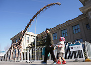 BEIJING, CHINA - DECEMBER 02: (CHINA OUT) <br /> <br /> World's Largest Restored Dinosaur Skeleton Apears In Beijing<br /> <br /> World's largest restored dinosaur skeleton is seen at the outside of Beijing Natural History Museum on December 2, 2014 in Beijing, China. World's largest 38-meters-long 14.5-meters-high restored dinosaur skeleton were exhibited at the outside of Beijing Natural History Museum on Wednesday in Beijing.<br /> ©Exclusivepix Media