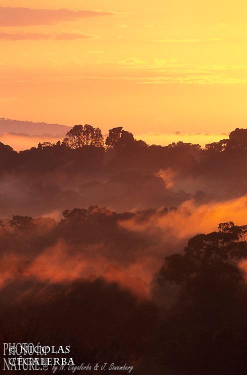 Lever de soleil sur la foret tropicale de Guyane Française