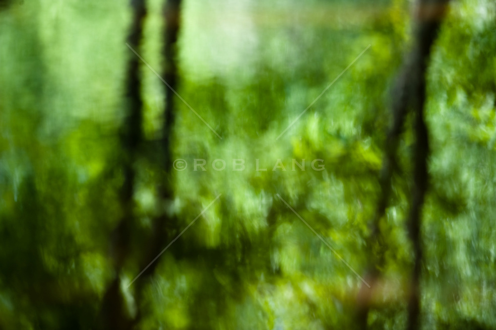 Abstract of water and trees