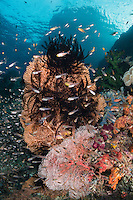 Sea Fans, Sweepers, and Sunbeams<br /> <br /> Shot in Indonesia