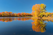 Vermilion River reflection in autumn<br /> Near Naughton<br /> Ontario<br /> Canada
