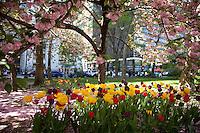 City Hall Park