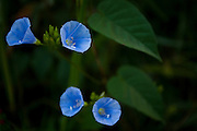 Esmeraldas_MG, Brasil...Detalhe de uma planta...A plant detail...Foto: JOAO MARCOS ROSA / NITRO