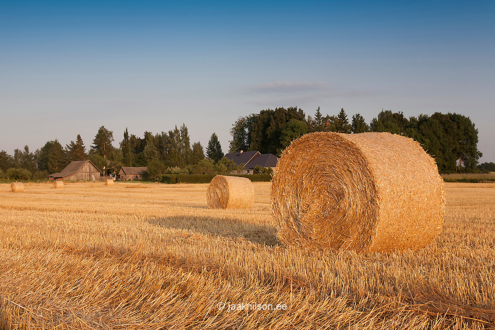 Corn Bales in Field, Estonia
