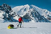 Skiing under Mt Foraker on Kahiltna glacier, ski expedition to traverse Denali, Mt McKinley, Alaska