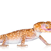 Reptiles on White