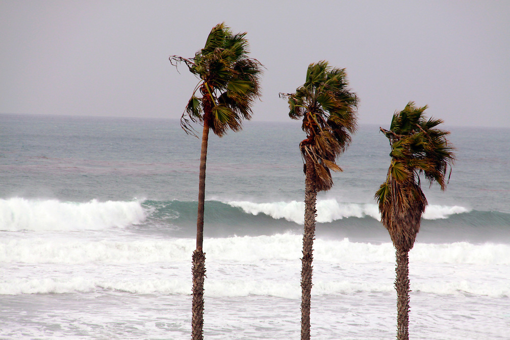 USA, California, Cardiff by the Sea. Palm trees and surf at Cardiff by the Sea, California.
