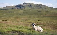 Highlands van Schotland. COPYRIGHT KOEN SUYK