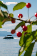 Flathead Lake and cherry tree with boat going by
