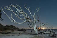 American Nightscapes / Driftwood Beach<br /> <br /> USA,Georgia,Jekyll Island, Driftwood beach