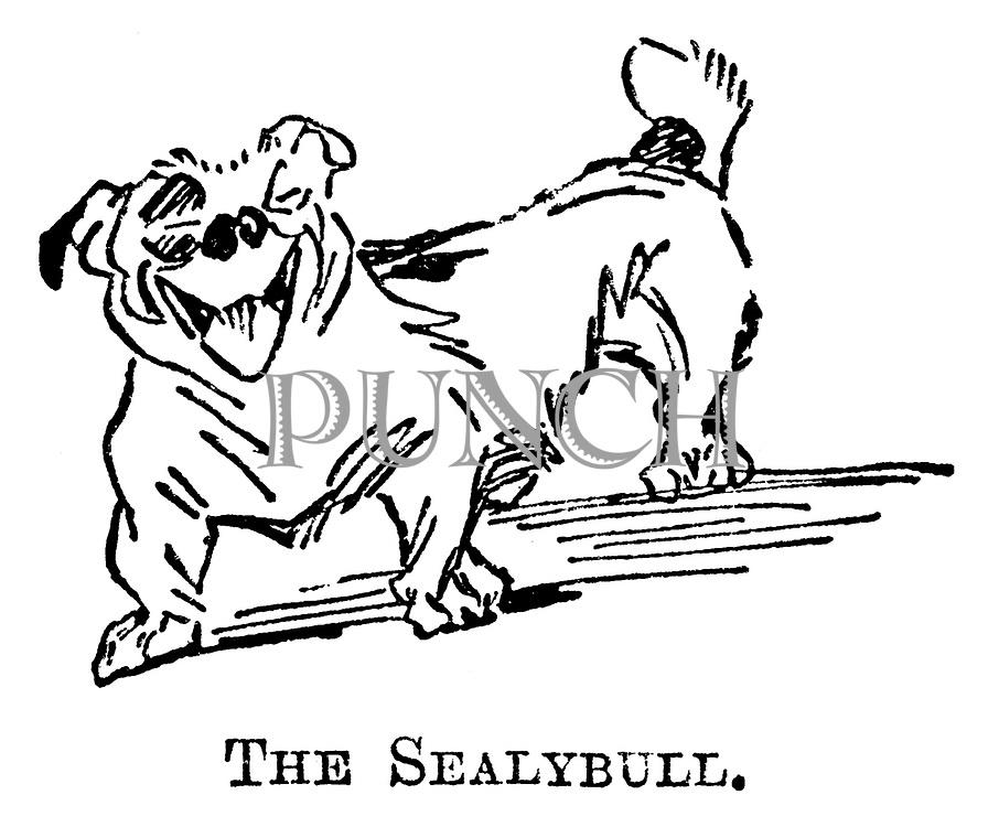 The Sealybull.