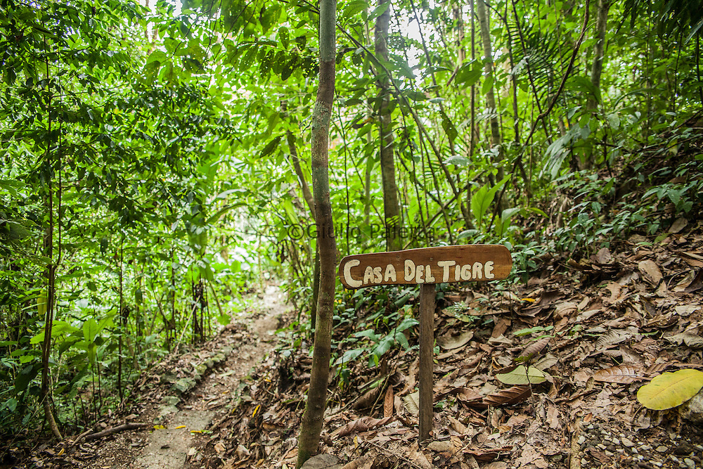 Entrance of one of the tree house fo Finca. One of the many paths of Finca Bellavista inside the forest
