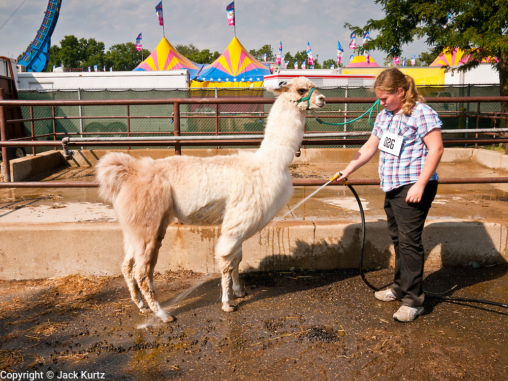"01 SEPTEMBER 2011 - ST. PAUL, MN: A girl in 4-H washes her llama before showing it at the Minnesota State Fair. The Minnesota State Fair is one of the largest state fairs in the United States. It's called ""the Great Minnesota Get Together"" and includes numerous agricultural exhibits, a vast midway with rides and games, horse shows and rodeos. Nearly two million people a year visit the fair, which is located in St. Paul.   PHOTO BY JACK KURTZ"