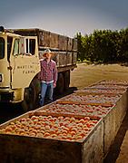 Peach farmer standing by his truck loaded full of fresh peaches in California shot as a Environmental Portraiture on a PhaseOne IQ180