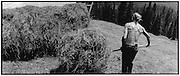Hay making, Bergheuet auf Alp Rischigenmatt, OW;<br /> faire les foins