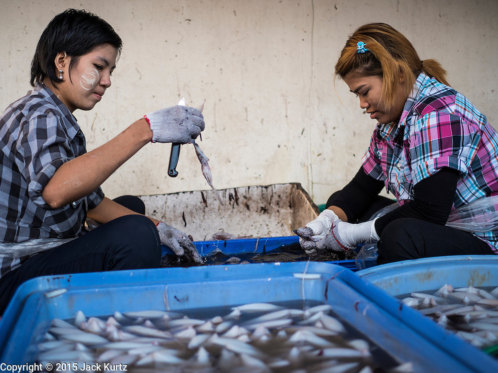 """11 JUNE 2015 - MAHACHAI, SAMUT SAKHON, THAILAND:  Burmese migrant workers at the Talay Thai market in Mahachai clean squid. Labor activists say there are about 200,000 migrant workers from Myanmar (Burma) employed in the fishing and seafood industry in Mahachai, a fishing port about an hour southwest of Bangkok. Since 2014, Thailand has been a Tier 3 country on the US Department of State Trafficking in Persons Report (TIPS). Tier 3 is the worst ranking, being a Tier 3 country on the list can lead to sanctions. Tier 3 countries are """"Countries whose governments do not fully comply with the minimum standards and are not making significant efforts to do so."""" After being placed on the Tier 3 list, the Thai government cracked down on human trafficking and has taken steps to improve its ranking on the list. The 2015 TIPS report should be released in about two weeks. Thailand is hoping that its efforts will get it removed from Tier 3 status and promoted to Tier 2 status.       PHOTO BY JACK KURTZ"""