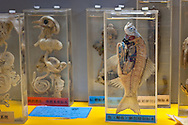 Variety of species preserved in fluid on display at the  Beijing Museum of Natural History in China.