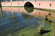 Stagnant waterway. Photographed in Gdansk, Poland