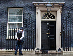 © Licensed to London News Pictures. 02/08/2016. London, UK. Palmerston, the cat belonging to the Foreign and Commonwealth Office, sniffs around No. 10 Downing Street, home to the Prime Minister's cat Larry. The cats have been seen fighting in recent weeks, and an animal charity has reportedly been called in to arbitrate the dispute. Photo credit: Rob Pinney/LNP