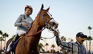 CYPRESS, CA - DEC 17: California Chrome #10, ridden by Victor Espinoza wins the Winter Challenge Stakes at Los Alamitos Race Course on December 17,  2016 in Cypress, California. (Photo by Alex Evers/Eclipse Sportswire/Getty Images)