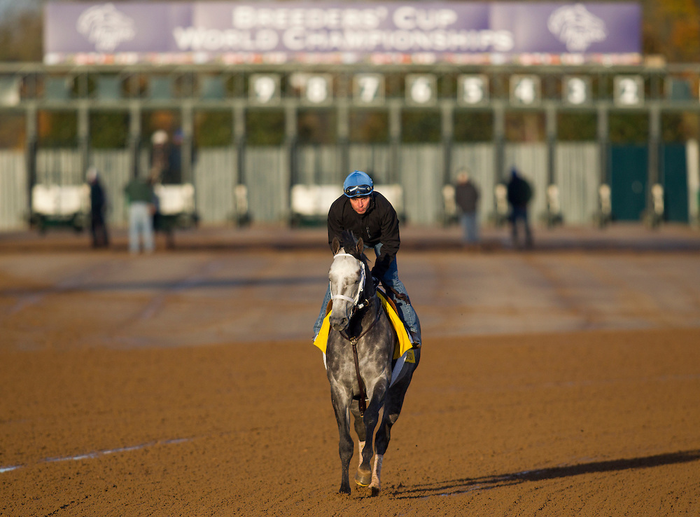 October 29, 2015: Frosted, trained by Kiaran P. McLaughlin and owned by Godolphin Racing LLC, exercises in preparation for the Breeders' Cup Classic at Keeneland Race Track in Lexington, Kentucky. Alex Evers/ESW/CSM