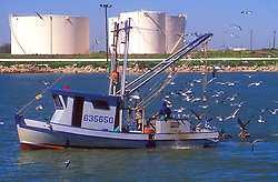 Stock photo of seagulls following an oyster boat
