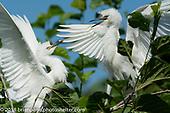 Wild Bird Rookery, St. Augustine