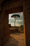 A door-framed tree on Palatine Hill, Rome, Italy