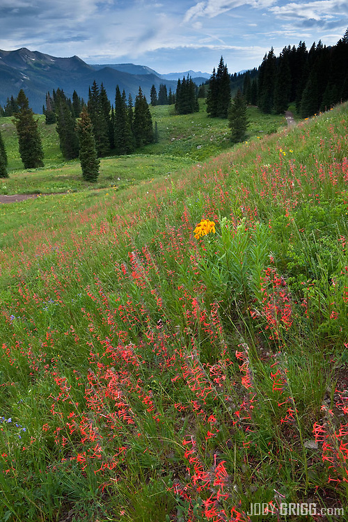 Wildflowers on the hill sides of nearby Lake Irwin outside of Crested Butte, Colorado.