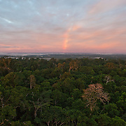 View from Canopy Tower, taken near the CICRA Station in the Los Amigos Conservation Concession, Peru.