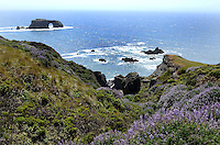 Pacific Coastline near the estuary of Russian River at Jenner, Sonoma County, California, USA. 201304292076 <br /> <br /> Copyright Image from Victor Patterson, 54 Dorchester Park, Belfast, UK, BT9 6RJ<br /> <br /> Tel: +44 28 9066 1296<br /> Mob: +44 7802 353836<br /> Voicemail +44 20 8816 7153<br /> Skype: victorpattersonbelfast<br /> Email: victorpatterson@me.com<br /> Email: victorpatterson@ireland.com (back-up)<br /> <br /> IMPORTANT: If you wish to use this image or any other of my images please go to www.victorpatterson.com and click on the Terms & Conditions. Then contact me by email or phone with the reference number(s) of the image(s) concerned.