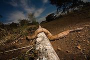 Monte Alegre de Minas_MG, Brasil...Cobra morta na BR 365 em Monte Alegre de Minas...The dead snake on the BR 365 in Monte Alegre de Minas...Foto: LEO DRUMOND / NITRO