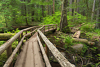 Wooden bridge on the Tamoitch Falls Trail, Cascade Range Oregon