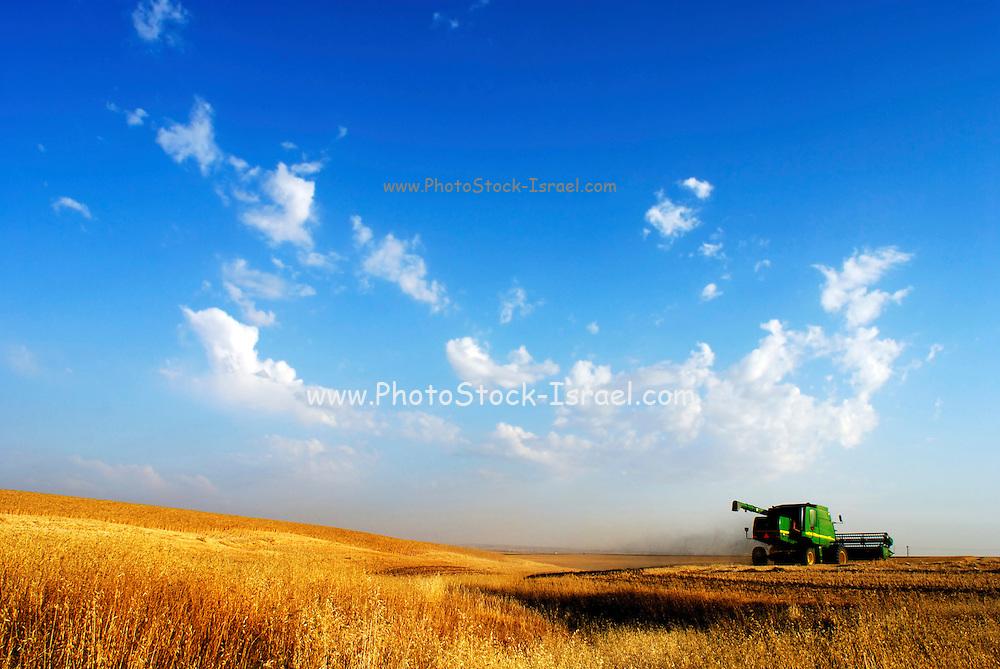Israel, Negev Desert, combine harvester wheat Harvesting, Long shot  May 2007