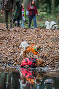 The walk on Hampstead Heath - A charity Halloween Dog Walk and Fancy Dress Show organised by All Dogs Matter at the Spaniards Inn, Hampstead. London 29 Oct 2017.