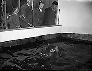 Gilbert the Hippopotamus arrives at Dublin Zoo, in Phoenix Park, Dublin, Ireland is the largest zoo in Ireland and one of Dublin's most popular attractions. <br />