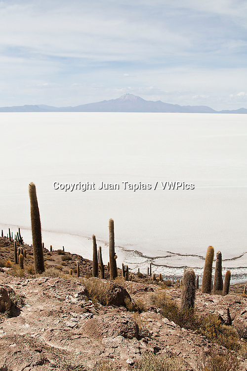 Giant Cactus up to 10 m in height are in the Fish Island. This island is the largest of all the islands in the center of the Salar de Uyuni. It is also a tourist center within the salar.