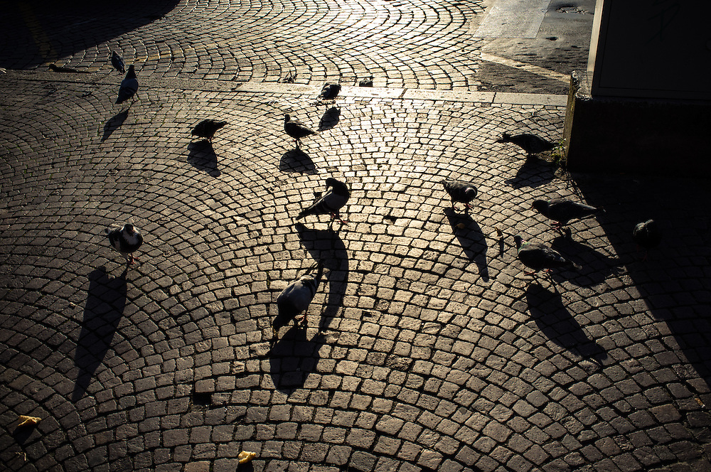 Pigeons on the cobbled streets of Florence, Italy