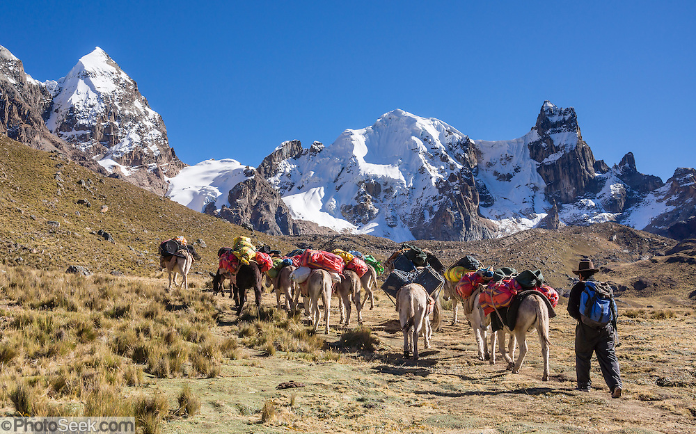 Our donkey train ascends Punta Cuyoc pass beneath Nevados Puscanturpa (5652 m). Day 5 of 9 days trekking around the Cordillera Huayhuash in the Andes Mountains, Peru, South America.