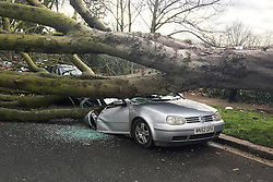 © Licensed to London News Pictures. 23/02/2017. London, UK. The scene where a large tree has been blown over, crushing cars in Chiswick, West London during storm Doris. Photo credit: Ben Cawthra/LNP