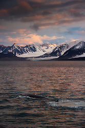 Fin Whale (Balaenoptera physalus) with arctic mountains, Spitsbergen, Svalbard