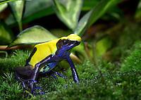 Surinam, South America