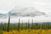 Canadian Rocky Mountains in fog<br /> Jasper National Park<br /> Alberta<br /> Canada