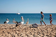 Children passing by pelicans. Monkey Mia in Shark Bay World Heritage area is the main atraction four tourists who flock here to see the dolphin colony who comes to the beach to be feed.