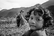 A girl looks on as an ethnic minority woman with baby in tow, works to harvest rice near Sapa, northern Vietnam.