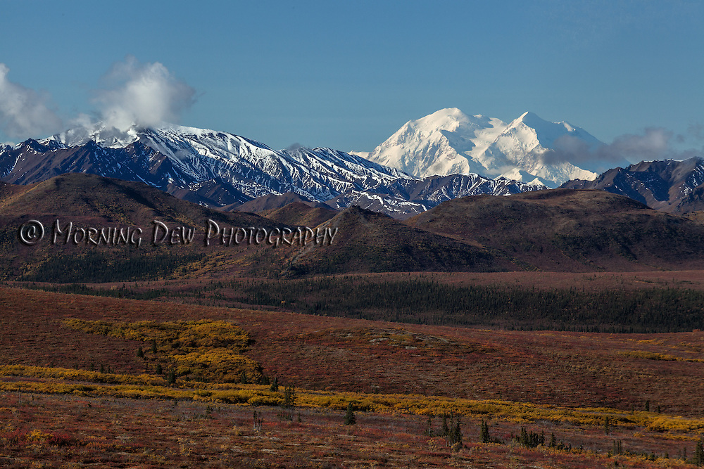 Snow-capped Denali rises above the fall tundra in Denali National Park