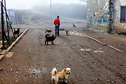 A man walking in between dogs in the middle of the Roma settlement located in 'Budulovska street' in  Moldava nad Bodvou (2012). The city has roughly 11200 inhabitants, about 1980 (18%) of them have Roma ethnicity and around 800 are living at the segregated settlement 'Budulovska Street' (2014).