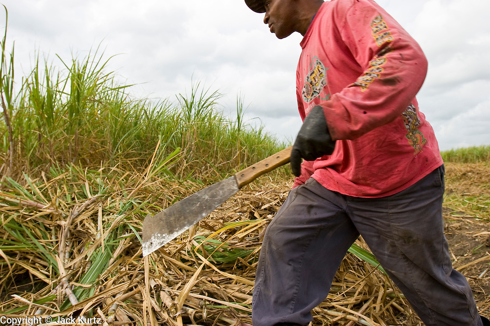 14 NOVEMBER 2005 - FRANKLIN, LA: LEROY HATCHERSON, a worker on Jesse Breaux' sugar cane, stacks cut cane while working the cane harvest during the 2005 sugar cane harvest. Louisiana is one of the leading sugar cane producing states in the US and the economy in southern Louisiana, especially St. Mary and Iberia Parishes, is built around the cultivation of sugar. Statewide, more than 460,000 acres of land is cultivated with sugar cane and more than 27,000 people work in the sugar industry in Louisiana. Sugar growers in the area are concerned that trade officials will eliminate sugar price supports during upcoming trade talks for the proposed Free Trade Area of the Americas (FTAA). They say elimination of price supports will devastate sugar growers in the US and the local economies of sugar growing areas. They also say it will ultimately lead to higher sugar prices for US consumers.   PHOTO BY JACK KURTZ
