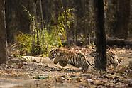India Safari 2017